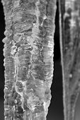 stock photo of icicle  - Icicle closeup - JPG