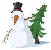 Snowman Spruce, Colored