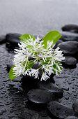 spring flower with leaf on wet background