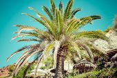 Palm trees and lush vegetation on a background of blue sky on the island of Ibiza, Europe.