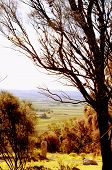 Retro Sunset Filter Style Scenic Views Overlooking Barossa Valley, South Australian Prominent Wine G