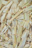 Sugarcane Bagasse.