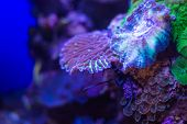 Corals Underwater World