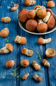 Orange-cap boletus mushrooms (aspen mushrooms)
