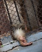 Monkey Behind Bars Closed, Asks Food