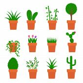 vector set of plants in pots