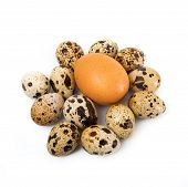 foto of quail egg  - chicken eggs and quail eggs in white background - JPG