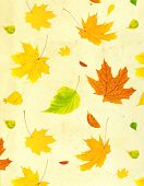 background with flying autumn leaves of a birch, maple and barberry