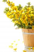Bouquet With Loosestrife In Wooden Bucket