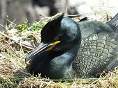 Shag On Nest