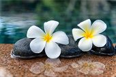Two Plumeria Flowers on Row of Stones at Edge of Pool in Peaceful Spa Setting
