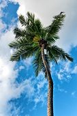 Looking Up at Palm Tree Against Blue Cloudy Sky