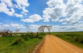 Beautiful landscape of Serengeti national park, Tanzania