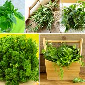 collage of different kinds of herbs (basil, oregano, parsley, rosemary)