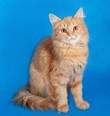 Red Fluffy Kitten Sitting On Blue