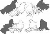 illustration with four white pigeon collection