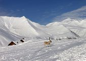 Dog On Ski Slope In Nice Day