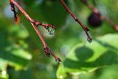 beautiful rain drops on twigs among green wet leaves