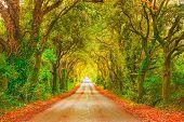 Autumn Or Fall, Tree Straight Road On Sunset. Maremma, Tuscany, Italy