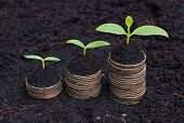 picture of coins  - trees growing on coins  - JPG