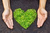 pic of environmental conservation  - hands holding green heart shaped tree  - JPG