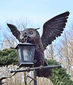 image of pecker  - Owl  - JPG