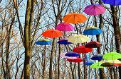 Bright umbrellas. Bright Colors.