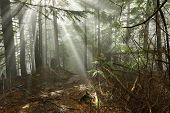 Lynn Peak Trail With Sun Ray