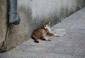 Wild Kitten In Mostar