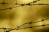 Barbed Wire Fence With Out Of Focus Background