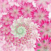 Spiral Flower Background. Pink Palette. Computer Generated Graphics.