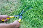 Scissors Cut Grass In Garden