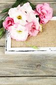 Beautiful eustoma flower on wooden background