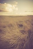 foto of grassland  - Landscape with withered grassland photographed in afternoon light - JPG