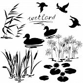 stock photo of duck  - Set of silhouettes of water plants and ducks - JPG