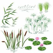 image of water lily  - Set of wetland plants - JPG