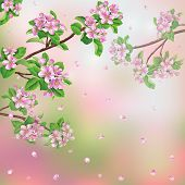 image of apple blossom  - Spring background with blossoming apple tree branches and flying petals - JPG