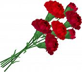 picture of carnation  - Bunch with  red carnations - JPG