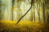 picture of mystery  - Mysterious forest in fog with orange leaves and yellow flowers - JPG