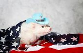 picture of ferrets  - Little cute ferret in a cowboy hat on the USA flag background - JPG