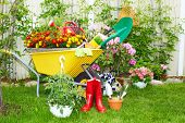 image of wheelbarrow  - Wheelbarrow with Gardening tools in the garden - JPG