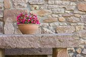 image of flower pots  - Ceramic flower pot with rose flowers on a stone table - JPG