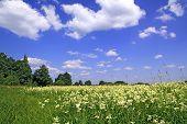 Sommer-Feld