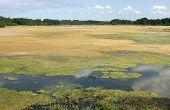 Lake Covered In Algae