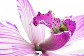 Постер, плакат: экзотические Голубая орхидея