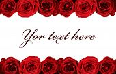 fresh red roses on white background