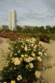 Citypark With Skyscrapers And Roses