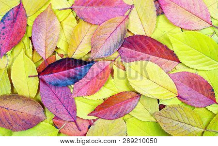 Fallen Autumn Leaves Texture Background