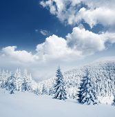 pic of winter landscape  - Beautiful winter landscape with snow covered trees - JPG