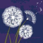 Abstract Black Dandelion, Dandelion With Flying Seeds - Vector For Stock. Fluffy Dandelion. Dandelio poster